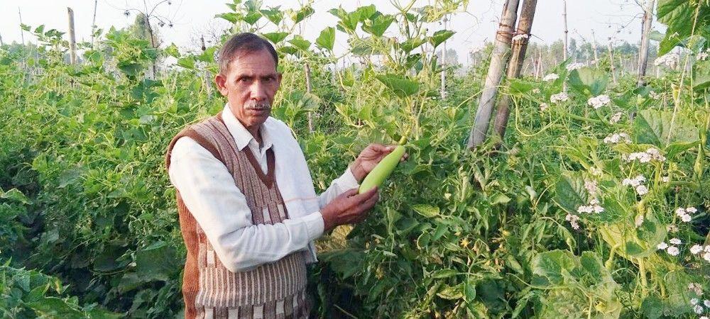 एक एकड़ में 15 हजार रुपये खर्च कर लौकी की खेती से साल भर में 1 लाख रुपये कमाता है ये किसान